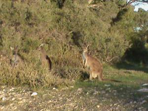 Coffin Bay Wildlife